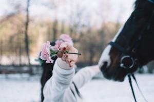 Babie lato, wesele, ślub, konie, sesja zdjęciowa, kwiaty, aranżacje